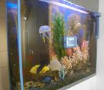 Робот для аквариумов RoboSnail - фото 2